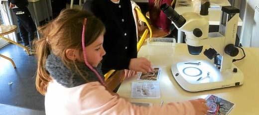 Atelier découverte des insectes et autres petits animaux pour les enfants