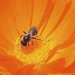 Bio-Studies pollinisateur