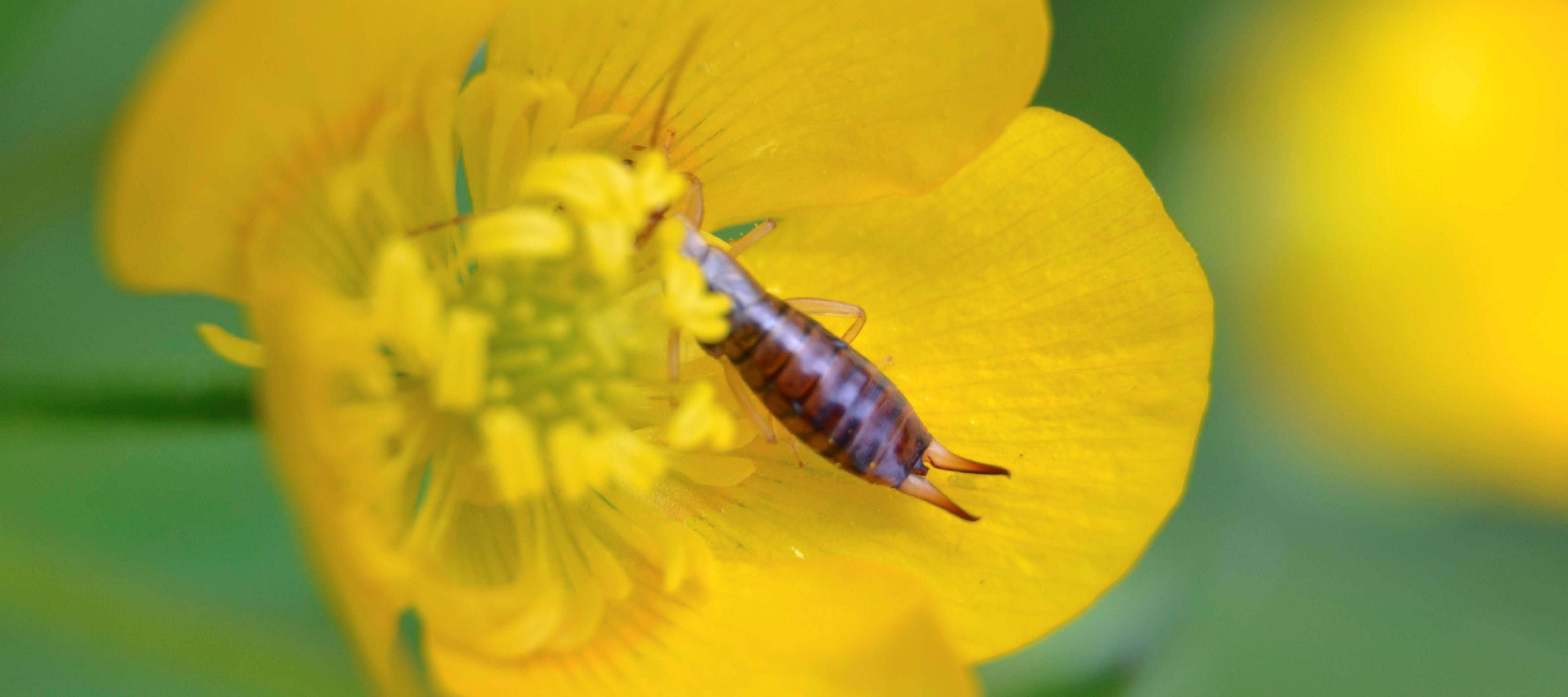 Etude : Identification insectes collectés en bordure de parcelles cultivées